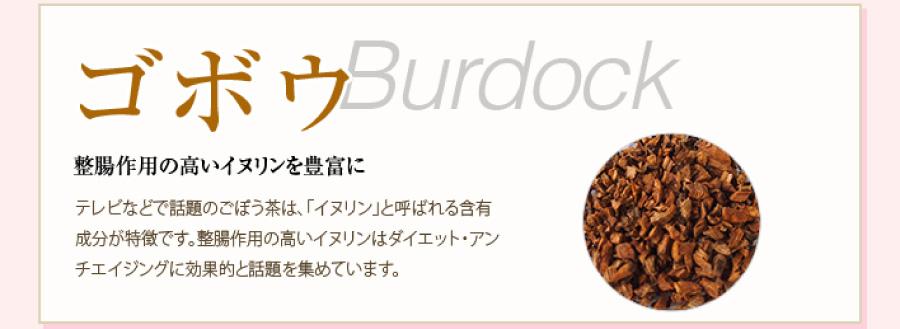 ゴボウ Burdock 整腸作用の高いイヌリンを豊富に。テレビなどで話題のごぼう茶は、「イヌリン」と呼ばれる含有成分が特徴です。整腸作用の高いイヌリンはダイエット・アンチエイジングに効果的と話題を集めています。
